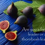 #164: Are you a fig tree leader or a thornbush leader?
