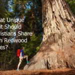 #173: What Unique Trait Should Christians Share with Redwood Trees?